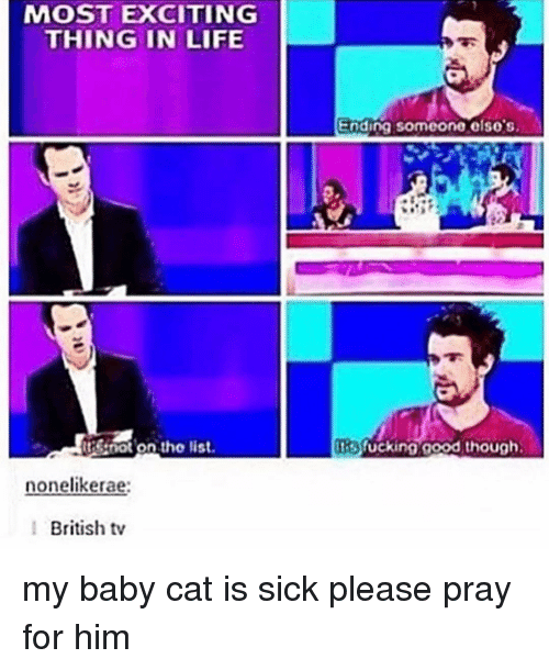 Life, Memes, and British: MOST EXCITING  THING IN LIFE  Ending someone e so's  tstnot on tho list  tsfucking aood though  nonelikerae:  British tv my baby cat is sick please pray for him