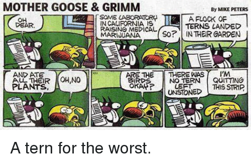 grimm: MOTHER GOOSE & GRIMM  By MIKE PETERS  LABORATORA  A FLOCK OF  IN CALIFORNIA IS  DEAR.  TERNS LANDED  RAISING MEDICAL  So? IN THEIR GARDEN  MARIJUANA  ARE THE  THERE WAS Al'M  T AND ATE  OH,NO  QUITTING  BIRDS  NO TERN  OKAP?  PLANTS  LEFT  THIS STRIP  UNSTONED A tern for the worst.