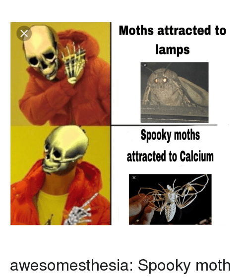 Tumblr, Blog, and Http: Moths attracted to  lamps  Spooky moths  attracted to Calcium awesomesthesia:  Spooky moth