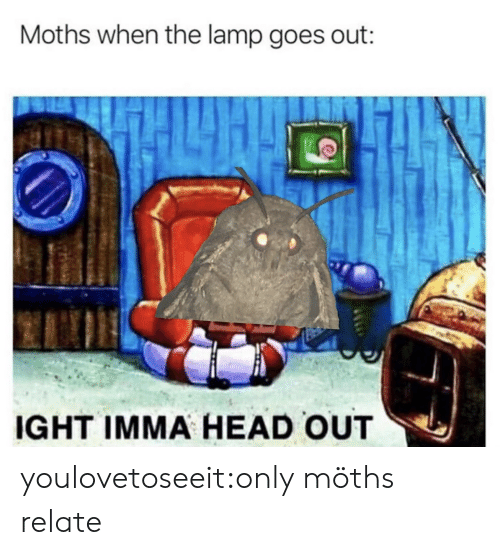 Head, Target, and Tumblr: Moths when the lamp goes out:  IGHT IMMA HEAD OUT youlovetoseeit:only möths relate