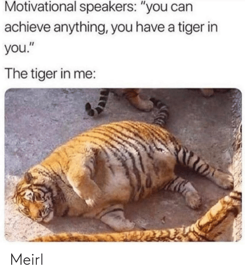 """Tiger: Motivational speakers: """"you can  achieve anything, you have a tiger in  you.""""  The tiger in me: Meirl"""
