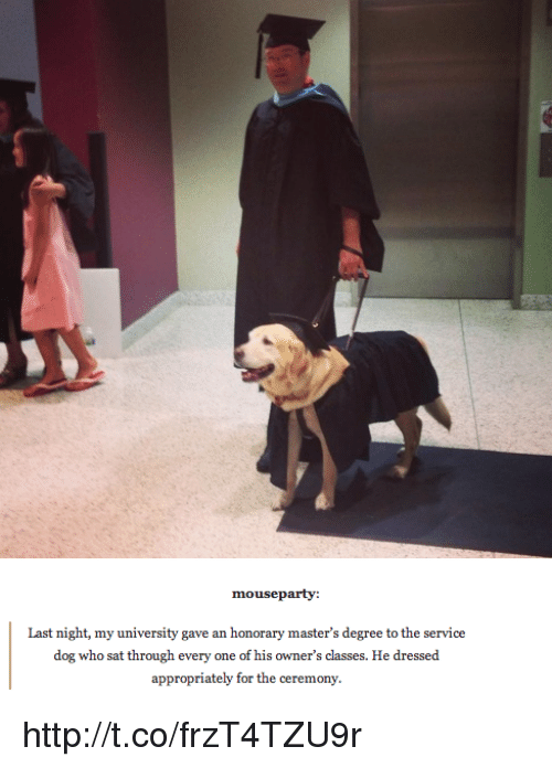 Memes, Mouse, and 🤖: mouse party:  Last night, my university gave an honorary master's degree to the service  dog who sat through every one of his owner's classes. He dressed  appropriately for the ceremony. http://t.co/frzT4TZU9r