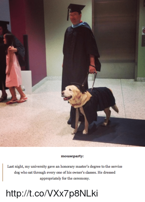 Memes, Mouse, and 🤖: mouse party:  Last night, my university gave an honorary master's degree to the service  dog who sat through every one of his owner's classes. He dressed  appropriately for the ceremony. http://t.co/VXx7p8NLki