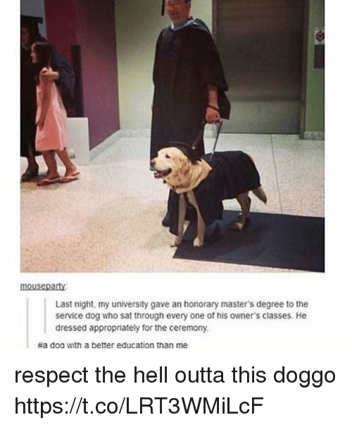 Memes, Respect, and Masters: mousepaty  Last night, my university gave an honorary master's degree to the  service dog who sat through every one of his owner's classes. He  dressed appropriately for the ceremony.  #a doa with a better education than me respect the hell outta this doggo https://t.co/LRT3WMiLcF