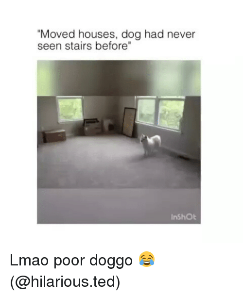"""Funny, Lmao, and Ted: """"Moved houses, dog had never  seen stairs before""""  InShOt Lmao poor doggo 😂 (@hilarious.ted)"""