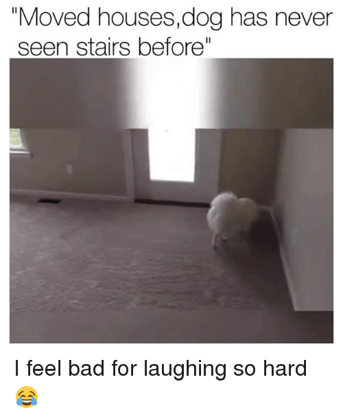 """Bad, Funny, and Never: """"Moved houses,dog has never  seen stairs before"""" I feel bad for laughing so hard 😂"""