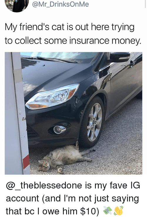 Friends, Funny, and Money: @Mr_DrinksOnMe  My friend's cat is out here trying  to collect some insurance money. @_theblessedone is my fave IG account (and I'm not just saying that bc I owe him $10) 💸👋