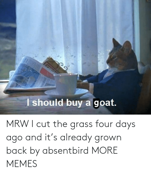 MRW: MRW I cut the grass four days ago and it's already grown back by absentbird MORE MEMES