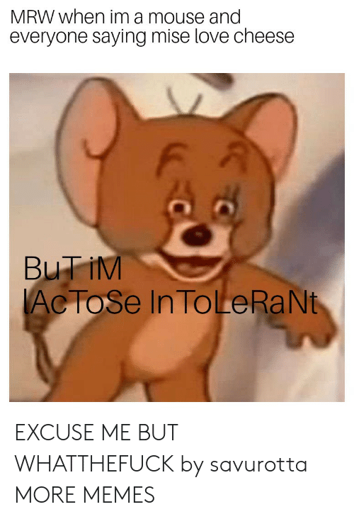 MRW: MRW when im a mouse and  everyone saying mise love cheese  F A  Ac ToSe In ToLeRaNt EXCUSE ME BUT WHATTHEFUCK by savurotta MORE MEMES