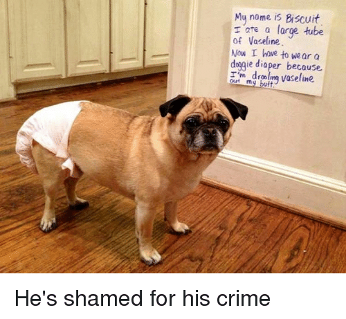 Crime, Tube, and Vaseline: Mu nome is Biscuit  r are a large tube  of Vaseline.  Now I hove to wear a  doggie diaper because  r m ndrooling vaseline He's shamed for his crime