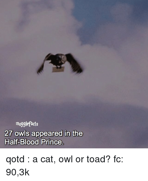 Toade: mugglefacts  27 owls appeared in the  Half-Blood Prince qotd : a cat, owl or toad? fc: 90,3k
