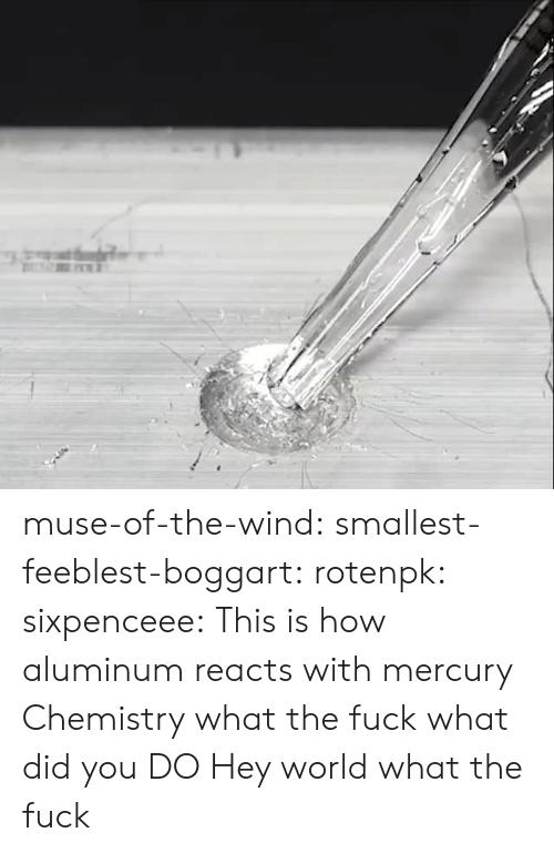 Muse: muse-of-the-wind:  smallest-feeblest-boggart: rotenpk:  sixpenceee: This is how aluminum reacts with mercury  Chemistry what the fuck  what did you DO  Hey world what the fuck