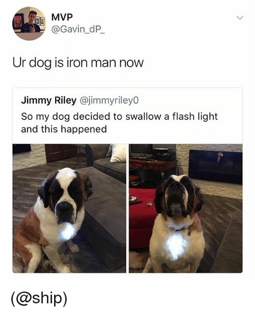 Iron Man, Dank Memes, and Flash: MVP  @Gavin_dP_  Ur dog is iron man now  Jimmy Riley @jimmyriley0  So my dog decided to swallow a flash light  and this happened (@ship)