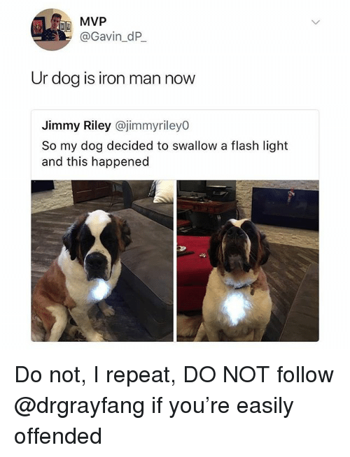 Iron Man, Memes, and 🤖: MVP  @Gavin_dP  Ur dog is iron man now  Jimmy Riley @jimmyriley0  So my dog decided to swallow a flash light  and this happened Do not, I repeat, DO NOT follow @drgrayfang if you're easily offended