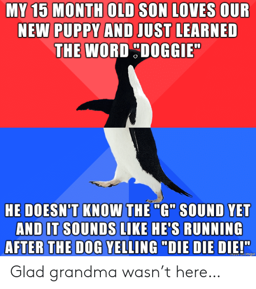 "Grandma, Imgur, and Puppy: MY 15 MONTH OLD SON LOVES OUR  NEW PUPPY AND JUST LEARNED  THE WORD DOGGIE  HE DOESN'T KNOW THE ""G"" SOUND YET  AND IT SOUNDS LIKE HE'S RUNNING  AFTER THE DOG YELLING ""DIE DIE DIE!""  haue imgur Glad grandma wasn't here…"