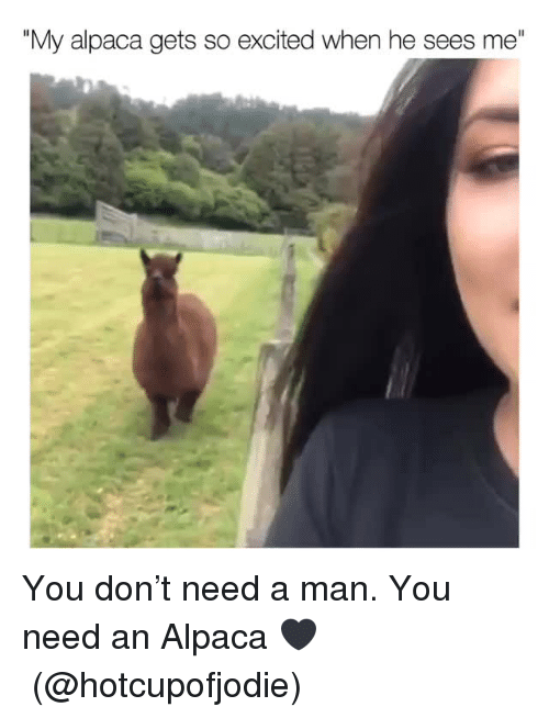 """Need A Man: """"My alpaca gets so excited when he sees me"""" You don't need a man. You need an Alpaca 🖤(@hotcupofjodie)"""