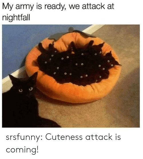 Tumblr, Army, and Blog: My army is ready, we attack at  nightfall  0 srsfunny:  Cuteness attack is coming!
