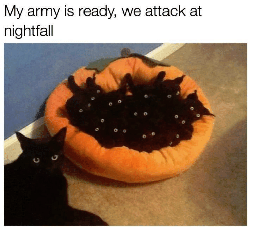 Army, Nightfall, and  Ready: My army is ready, we attack at  nightfall