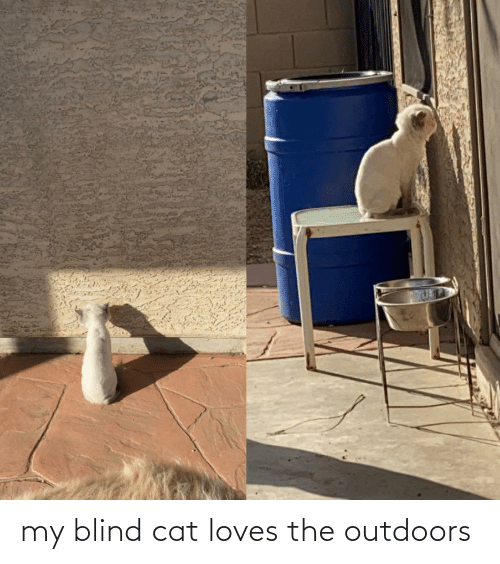 blind: my blind cat loves the outdoors
