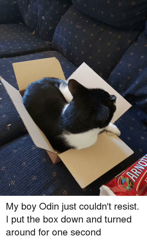 Odin, Boy, and Box: My boy Odin just couldn't resist. I put the box down and turned around for one second