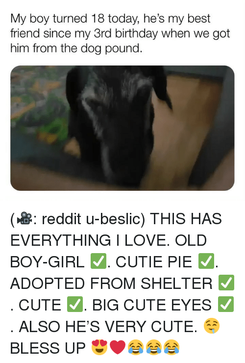 Best Friend, Birthday, and Bless Up: My boy turned 18 today, he's my best  friend since my 3rd birthday when we got  him from the dog pound. (🎥: reddit u-beslic) THIS HAS EVERYTHING I LOVE. OLD BOY-GIRL ✅. CUTIE PIE ✅. ADOPTED FROM SHELTER ✅. CUTE ✅. BIG CUTE EYES ✅. ALSO HE'S VERY CUTE. 🤤 BLESS UP 😍❤️😂😂😂