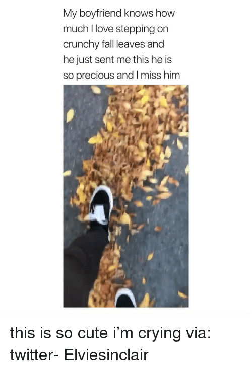 Crying, Cute, and Fall: My boyfriend knows how  much l love stepping on  crunchy fall leaves and  he just sent me this he is  so precious and I miss him this is so cute i'm crying via: twitter- Elviesinclair