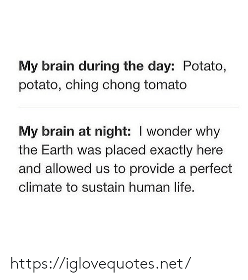 Potato: My brain during the day: Potato,  potato, ching chong tomato  My brain at night: I wonder why  the Earth was placed exactly here  and allowed us to provide a perfect  climate to sustain human life. https://iglovequotes.net/