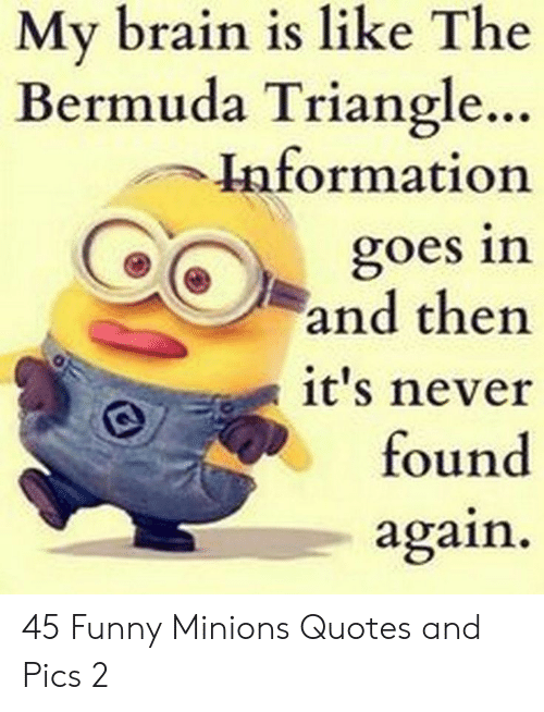 Quotes And: My brain is like The  Bermuda Triangle..  Information  goes in  and then  it's never  found  again 45 Funny Minions Quotes and Pics 2