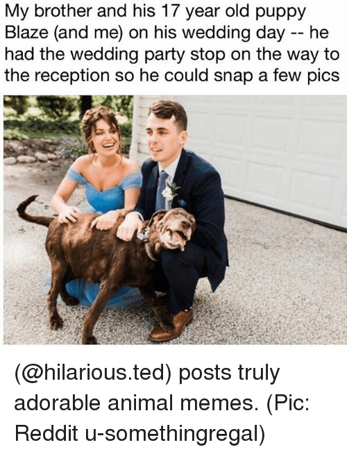 Reddits: My brother and his 17 year old puppy  Blaze (and me) on his wedding day -- he  had the wedding party stop on the way to  the reception so he could snap a few pics (@hilarious.ted) posts truly adorable animal memes. (Pic: Reddit u-somethingregal)