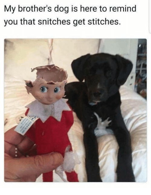 Memes, Stitches, and 🤖: My brother's dog is here to remind  you that snitches get stitches.