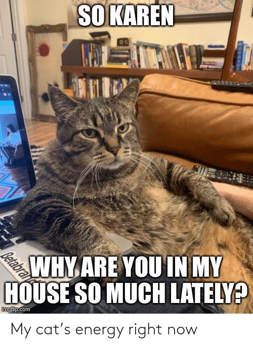 right: My cat's energy right now