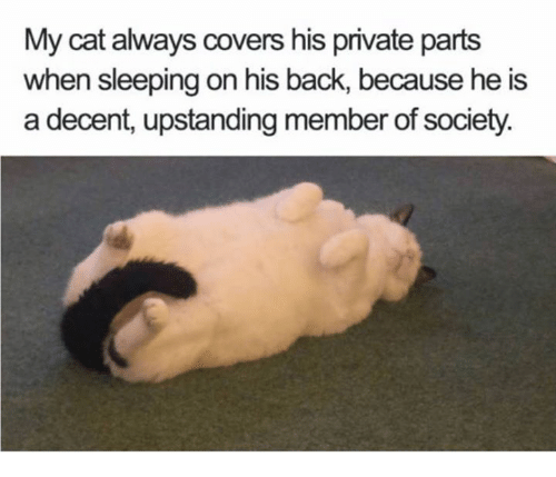 Memes, Covers, and Sleeping: My cat always covers his private parts  when sleeping on his back, because he is  a decent, upstanding member of society.