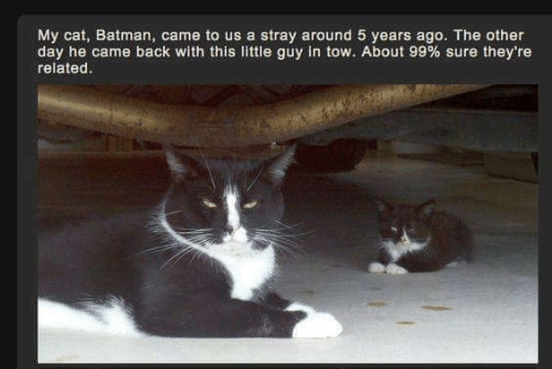 Batman, Back, and Cat: My cat, Batman, came to us a stray around 5 years ago. The other  day he came back with this little guy in tow. About 99 % sure they're  related.