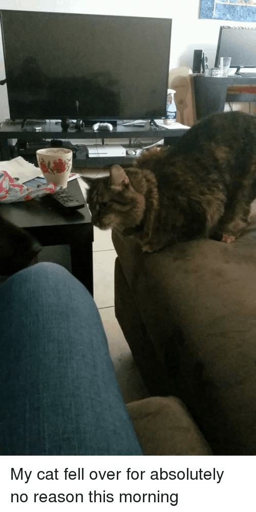 Falling Over: My cat fell over for absolutely no reason this morning