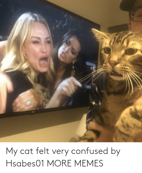 My Cat: My cat felt very confused by Hsabes01 MORE MEMES