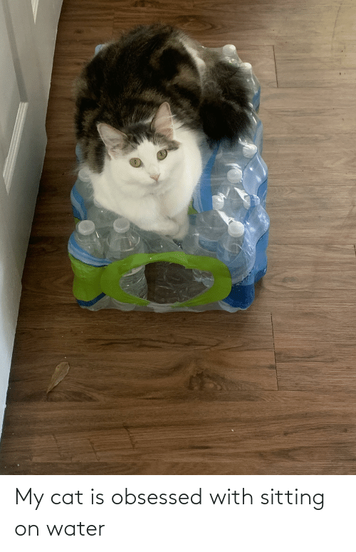 obsessed: My cat is obsessed with sitting on water