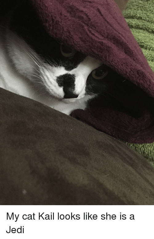 Jedi, Covers, and Cat: My cat Kail looks like she is a Jedi