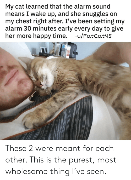 Alarm, Happy, and Time: My cat learned that the alarm sound  means I wake up, and she snuggles on  my chest right after. I've been setting my  alarm 30 minutes early every day to give  her more happy time. -u/FatCat45 These 2 were meant for each other. This is the purest, most wholesome thing I've seen.