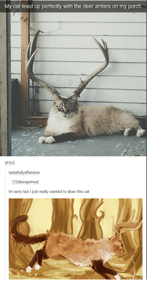 antlers: My cat lined up perfectly with the deer antlers on my porch  kf1n3  tastefullyoffensive:  12dianaprince]  im sorry but i just really wanted to draw this cat