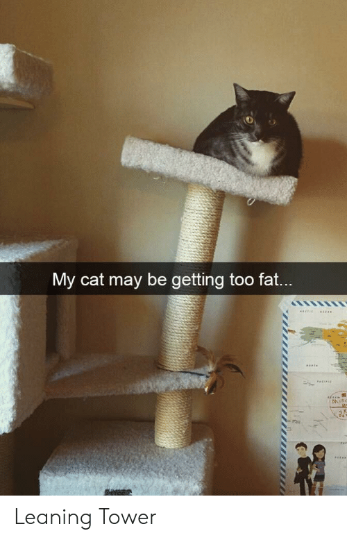 tower: My cat may be getting too fat...  PE  Mihc Leaning Tower