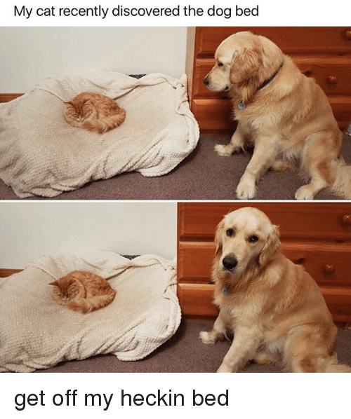 Heckin: My cat recently discovered the dog bed get off my heckin bed