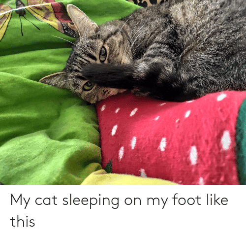 foot: My cat sleeping on my foot like this