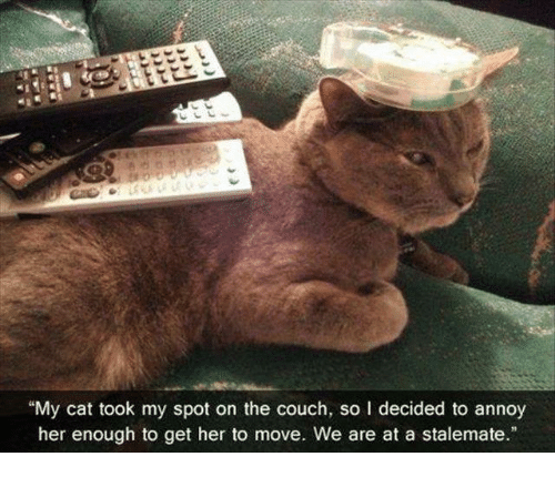 """stalemate: """"My cat took my spot on the couch, so l decided to annoy  her enough to get her to move. We are at a stalemate."""""""