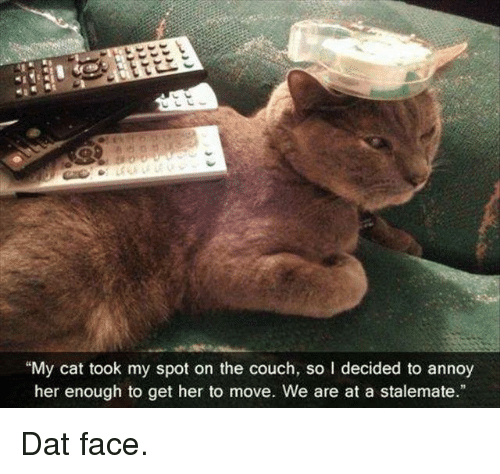 """stalemate: """"My cat took my spot on the couch, so l decided to annoy  her enough to get her to move. We are at a stalemate."""" Dat face."""
