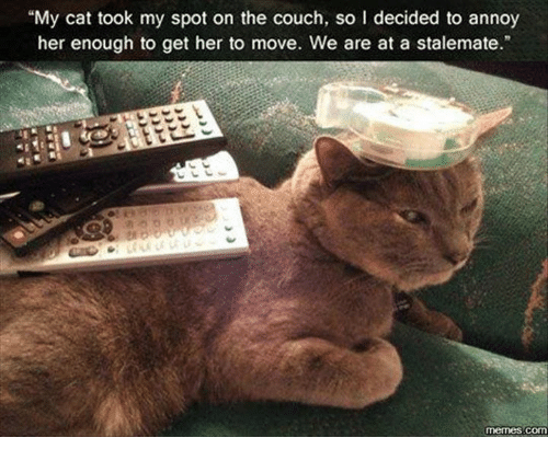 """stalemate: """"My cat took my spot on the couch, so l decided to annoy  her enough to get her to move. We are at a stalemate.""""  memes com"""