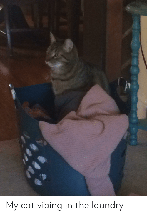 Laundry: My cat vibing in the laundry