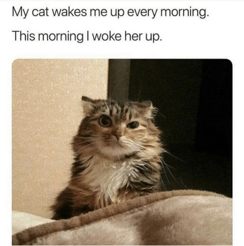 Her, Cat, and This: My cat wakes me up every morning.  This morning I woke her up.
