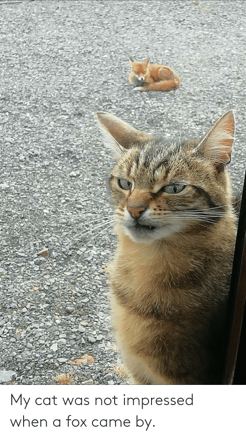 My: My cat was not impressed when a fox came by.