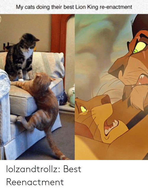 Cats, Tumblr, and Best: My cats doing their best Lion King re-enactment lolzandtrollz:  Best Reenactment
