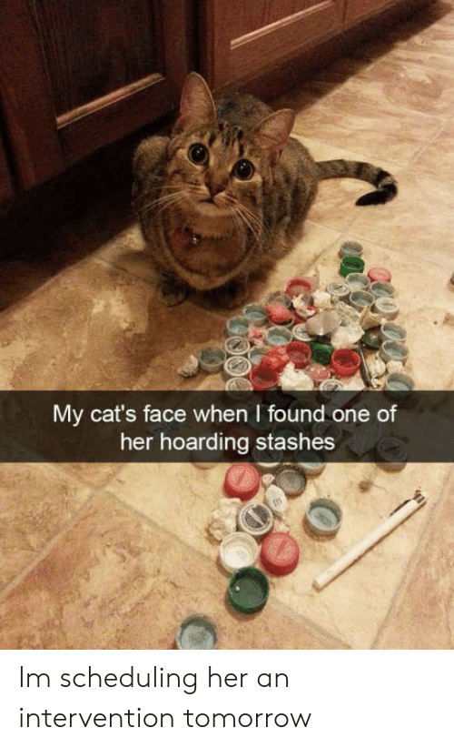 hoarding: My cat's face when I found one of  her hoarding stashes Im scheduling her an intervention tomorrow